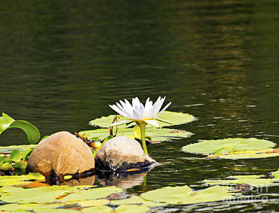 Photograph - Waterlily And Coconuts by Patricia Griffin Brett