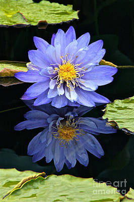 Photograph - Waterlily And Reflection by Byron Varvarigos