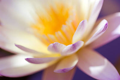 Photograph - Waterlily Dreams 11 by Priya Ghose
