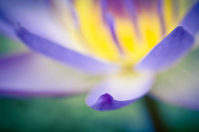 Photograph - Waterlily Dreams 6 by Priya Ghose