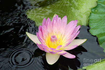 Photograph - Waterlily Flower by Eva Kaufman