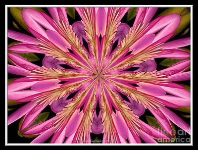 Waterlily Flower Kaleidoscope 4 Art Print by Rose Santuci-Sofranko