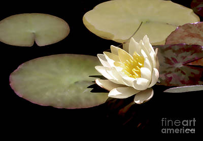 Waterlilies Digital Art - Waterlily I by Linda  Parker