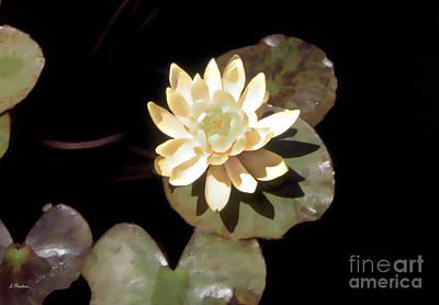 Waterlily II Art Print by Linda  Parker