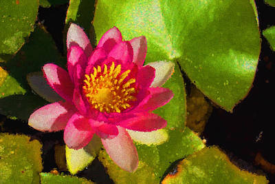 Waterlily Impression In Fuchsia And Pink Art Print