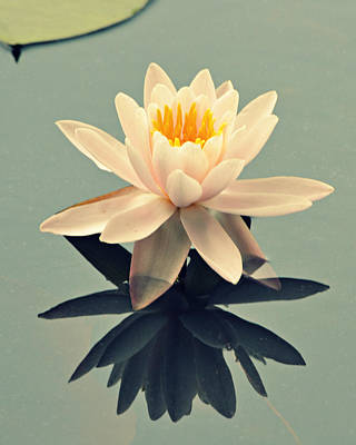 Photograph - Waterlily On Glass by Mary Zeman