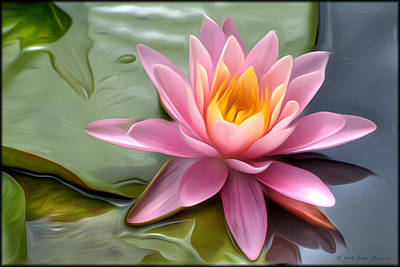 Photograph - Waterlily Pink by Erika Fawcett
