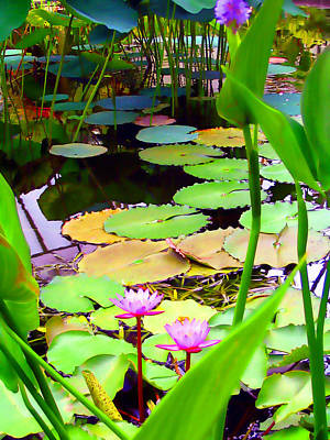 Photograph - Waterlily Pond by Amber Nissen