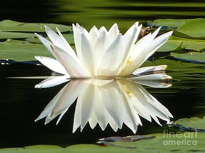 Photograph - Waterlily Reflection by Christine Stack