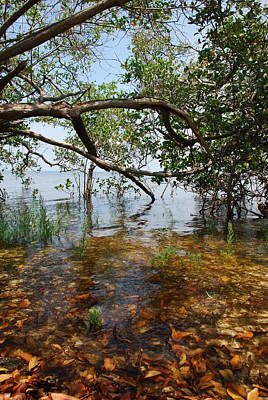Photograph - Water's Edge by Beverly Stapleton