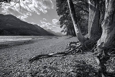 Tree Roots Photograph - Waterton Lake by Wayne Sherriff