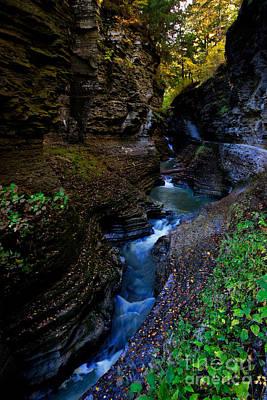 Plants Photograph - Watkins Glen State Park 8 by Mark Baker