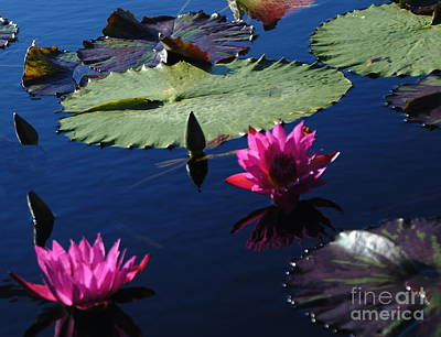 Photograph - Water Platters Pink by Jacqueline M Lewis