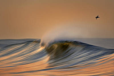 Photograph - Wave And Bird  Mg_6854dn by David Orias