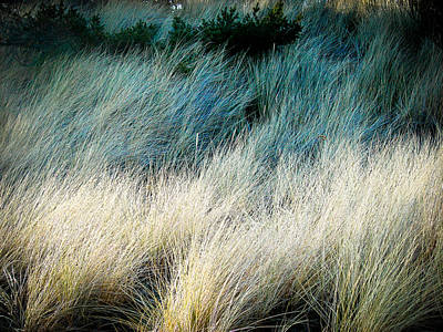 Photograph - Waves Of Grass by Ronda Broatch