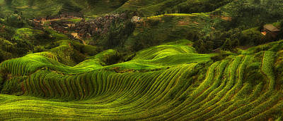 Dragon Photograph - Waves Of Rice - The Dragon's Backbone by Max Witjes