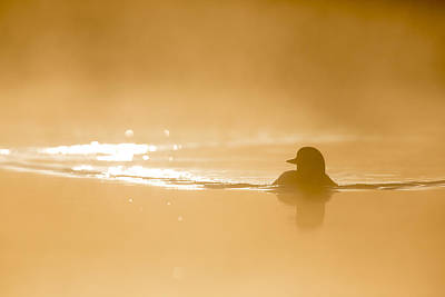 Loon Photograph - Waves On A Golden Morning by Tim Grams
