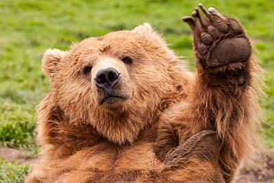 Photograph - Waving Bear by John Ferrante