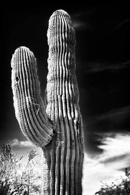 Photograph - Waving Cactus by John Rizzuto