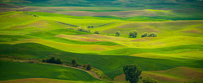 Photograph - Wavy Palouse by Kunal Mehra