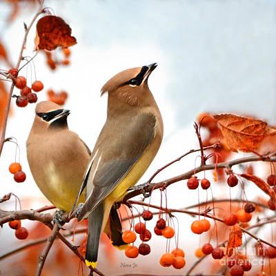 Cedar Waxwing Photograph - Beautiful Waxwing  by Nava Thompson