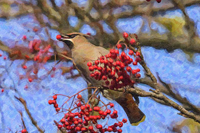 Digital Art - Waxwing Eating Berry by Liz Leyden