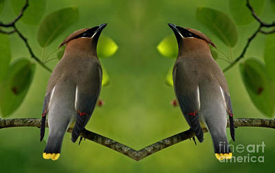 Waxwing Love Art Print by Inspired Nature Photography Fine Art Photography