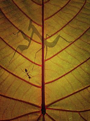 Ant Photograph - Wayang by Dedy Gunawan