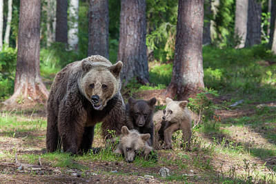 Brown Bear Wall Art - Photograph - We Are Family by Alessandro Catta