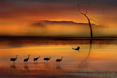 Crane Photograph - We Are Here Waiting For You by Shenshen Dou