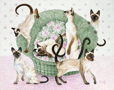 Baskets Photograph - We Are Siamese If You Please by Pat Scott