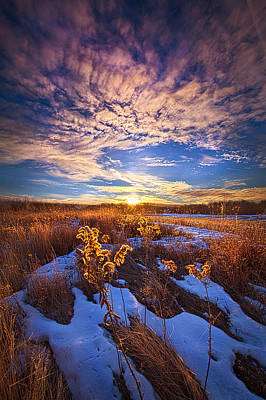 Red Leaves Snow Wall Art - Photograph - We Cannot Let Our Angels Go by Phil Koch