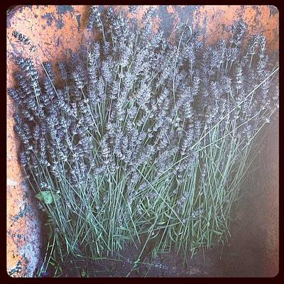 Lavender Photograph - We Need Smello-gram Now. #lavender by Phill Burrows