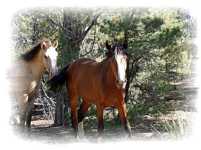 We Want To Run - Wild Horses Original