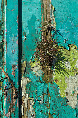 Photograph - Weathered And Worn 2 by Liz  Alderdice