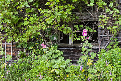 Photograph - Weathered Barn Garden by Alan L Graham