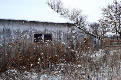 Weathered Barns In Winter Print by Amy Lucid