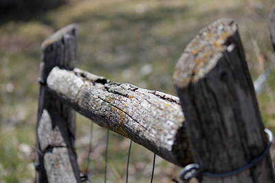 Photograph - Weathered Fence by Trent Mallett