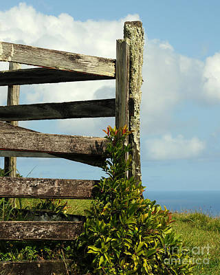 Weathered Fence Art Print by Vivian Christopher