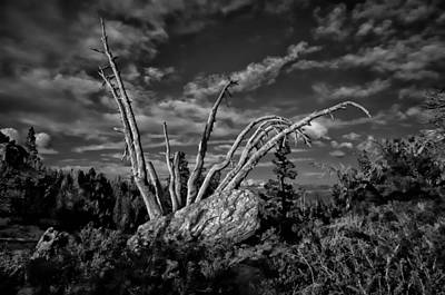Mammoth Lakes Photograph - Weathered by Scott McGuire