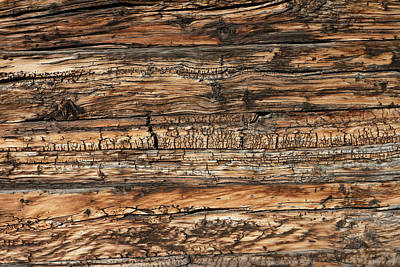 Photograph - Weathered Wood 5 by Charles Lupica