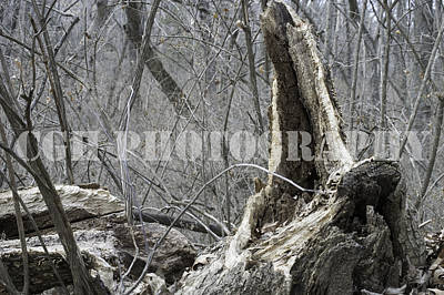 Weathered Wood Art Print by Caralee White