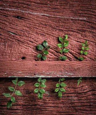 Photograph - Weathered Wood by James Barber
