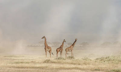 Trio Photograph - Weathering The Amboseli Dust Devils by Jeffrey C. Sink