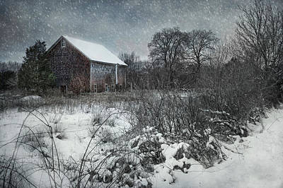 Photograph - Weathering Winter by Robin-Lee Vieira