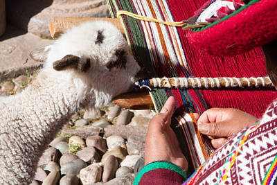 Weaver And Alpaca Lamb Cusco Peru Original by Dan Hartford