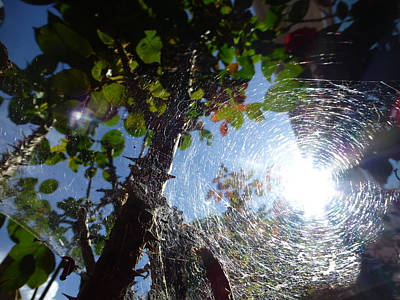 Photograph - Web by Claudia Goodell