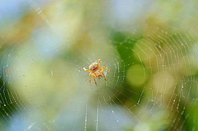 Photograph - Web Designer by Fraida Gutovich