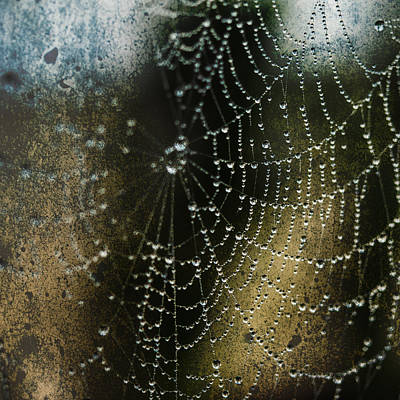 Web In The Mist Art Print