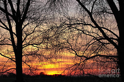 Photograph - Web Of Branches by David Warrington